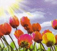 Тюльпаны размер 140х145 см (6 листов)